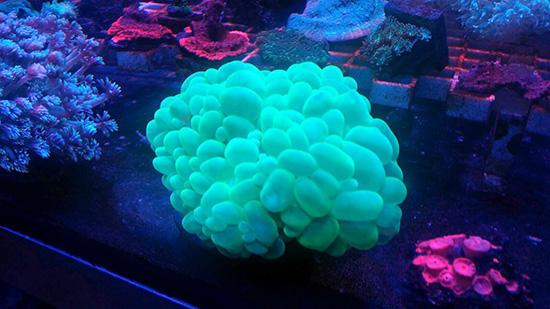 corales (97)