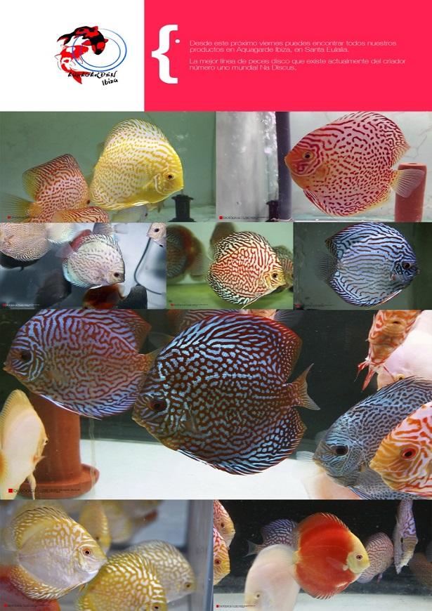 Aquagarden-Biotopica